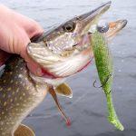Средства для ловли рыб