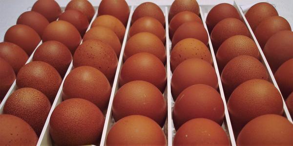 Купить инкубационное яйцо в Твери