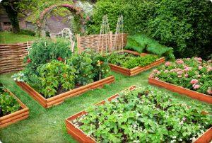 Сайт для садовода и огородника