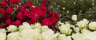 Особенности выращивания цветов на продажу
